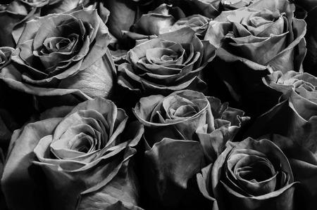rosas negras: black  roses background . close-up. festive bouquet. background. Foto de archivo