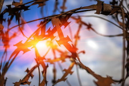 stabbing: stabbing sharp fence on blurred sky background at sunset