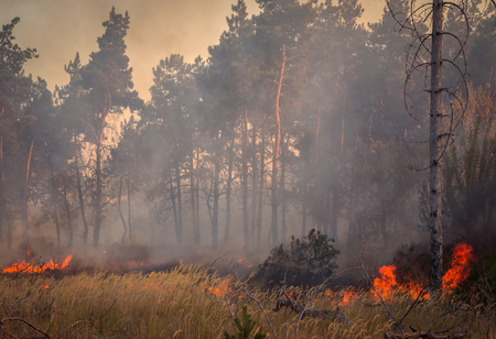 prescribed: Forest fire, wood- burning fire and grass Stock Photo