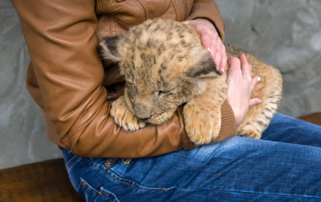 lion cub, girl  keep on hand and stroked.