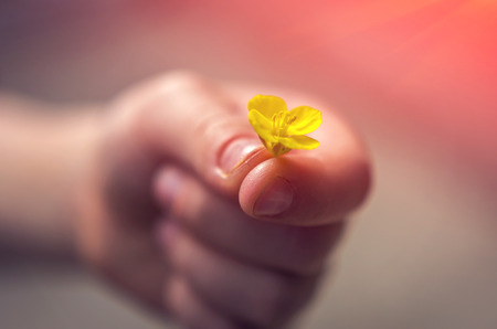 Hand gives a wild flower with love at sunset. romance, feelings Stock Photo