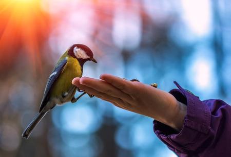 wilde vogel mees op de palm, op een achtergrond van mooie bokeh bij zonsondergang. Stockfoto