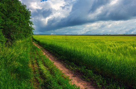 road in the field on a background of storm clouds . summer landscape. Stock Photo