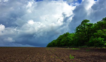 field of green grass on a background of storm clouds . Stock Photo