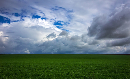 green grass on a background of storm clouds.