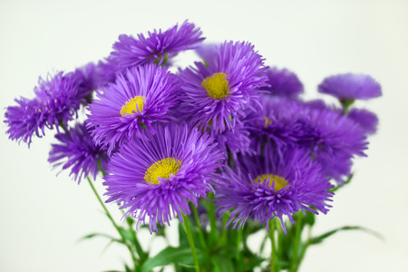 wild daisy flowers, gift spring bouquet. declaration of love. Stock Photo