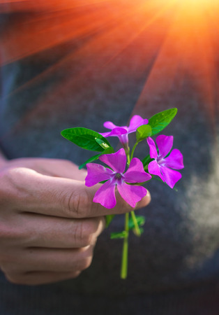 Hand gives a wild  flower with love at sunset. Sympathy, friendly gesture.
