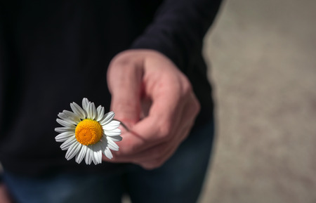 Hand gives a wild daisy flower with love. Sympathy, friendly gesture.