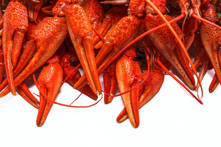 juicy red crawfish with large claws, isolated on white background. Stock Photo