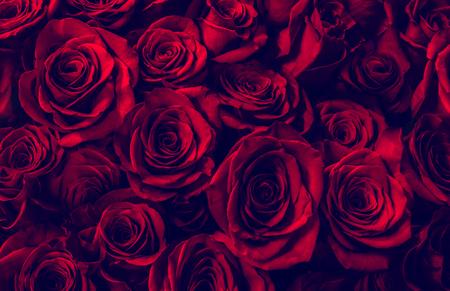 Natuurlijke rode rozenachtergrond. wenskaart met een luxe rozen