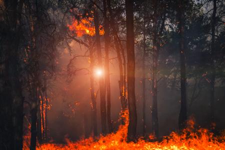 fuego. incendio forestal al atardecer, quema de bosque de pinos en el humo y las llamas.