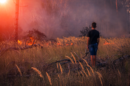 fire. boy look at wildfire at sunset, burning pine forest in the smoke and flames. Stok Fotoğraf