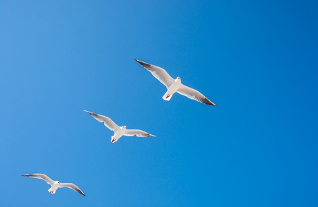 seagulls birds fly in the summer in the sky over the ocean. Stok Fotoğraf