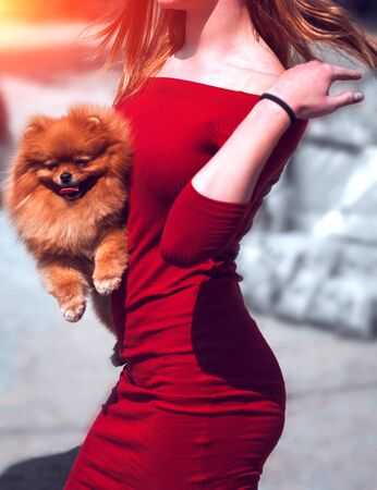 sexy young girl with a dog in her arms. Spitz pet with the hostess. 写真素材