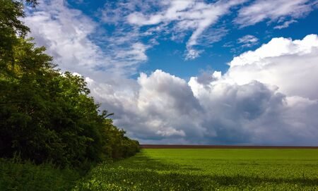 green grass and trees on a background of storm clouds .