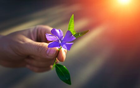 girls hand giving wild flower with love at sunset. beautiful background 写真素材