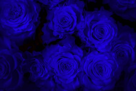 blue roses  neon isolated on a black background. I love you. Foto de archivo