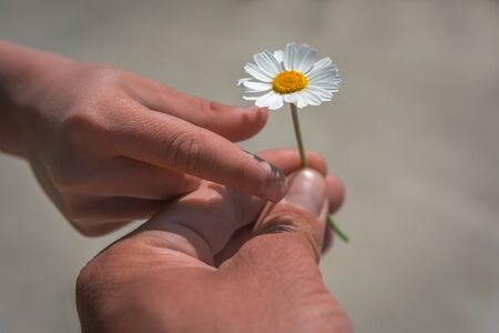 girl's hand giving wild flower with love at sunset. beautiful background