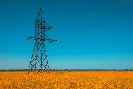 Canola field with high-voltage  power lines at sunset. Canola biofuel, organic.