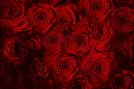 frische rote Rosen lokalisiert auf einem schwarzen Hintergrund. Vertikale Grußkarte mit Rosen