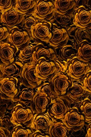 buds gold roses close-up. flowers of love.