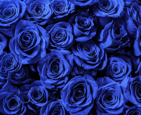 blue roses isolated on a black background. I love you. 免版税图像