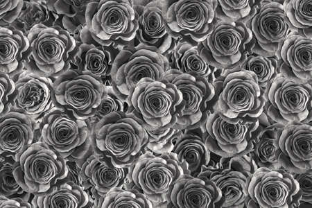 black roses isolated on a black background. Greeting card with roses