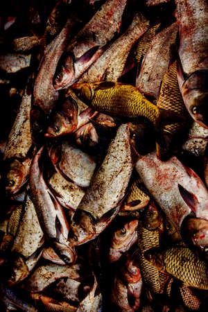 industrial fishing. poaching, illegal fishing and seafood.