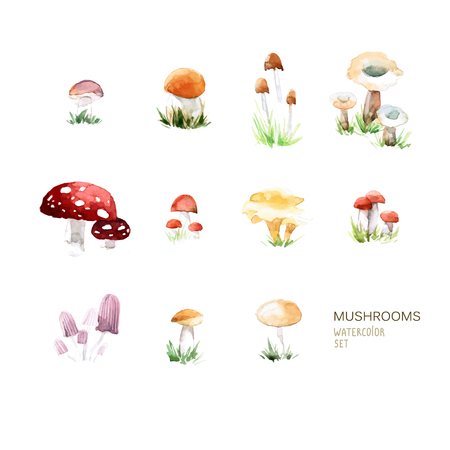 Vector set of watercolor mushroom elements on white background. Perfect for magazine or book, poster and card design, menu cover.