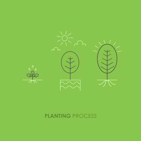 Phases plant growth. Sprout in the ground made in trendy line style. Vector illustration.