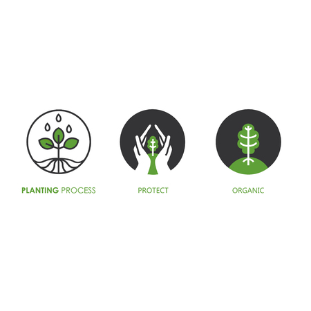 Planting process infographic. Growth stages. Vector illustration. Banque d'images - 111943136