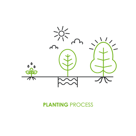 Planting process infographic. Growth stages. Steps of plant growth in trendy linear style. Vector illustration. Banque d'images - 111943137