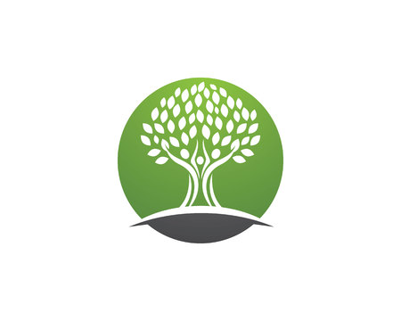 tree: family tree Illustration