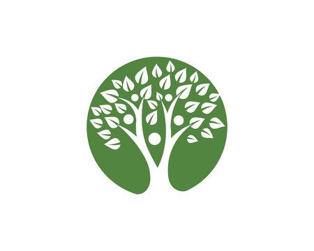 Tree leaf vector logo design, eco-friendly concept Illustration