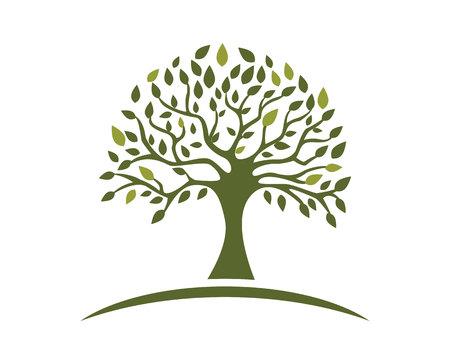 Eco Tree Leaf Logo Template Çizim