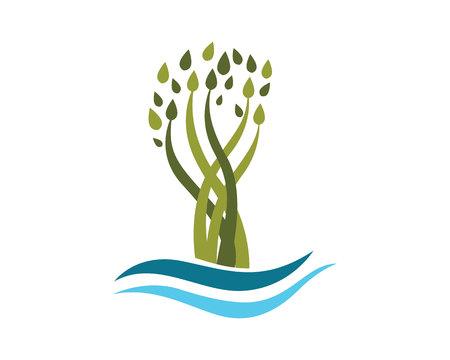 cedro: Plantilla Logotipo de la hoja del árbol de Eco