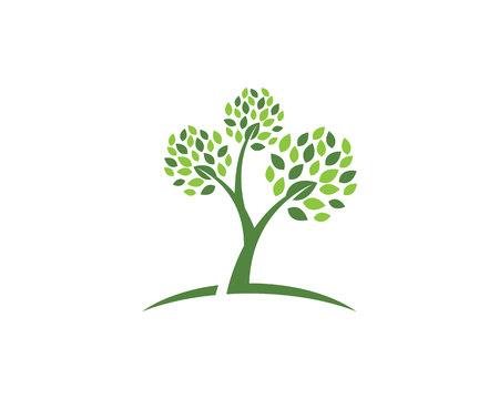 Plantilla Logotipo de la hoja del árbol de Eco