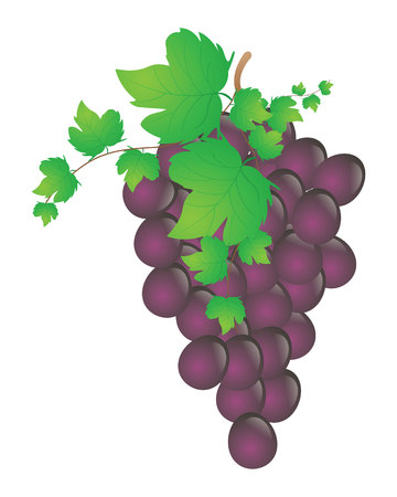 Bunch of wine grapes with leaf icon Illustration