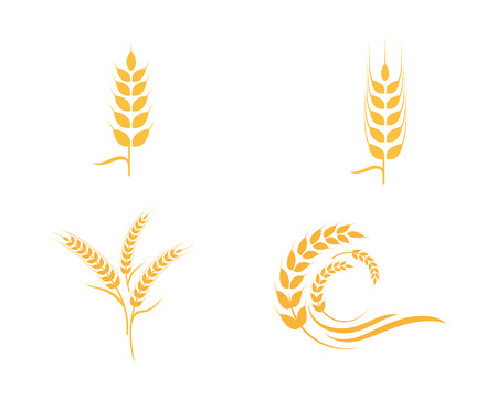 Agriculture wheat icon Template vector icon design