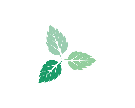 Mint leaves flat vector color icon template