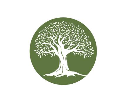 Olive tree vector illustration design template Illustration