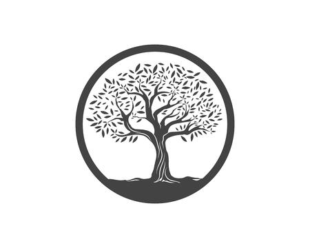 Olive tree vector illustration design template Vettoriali