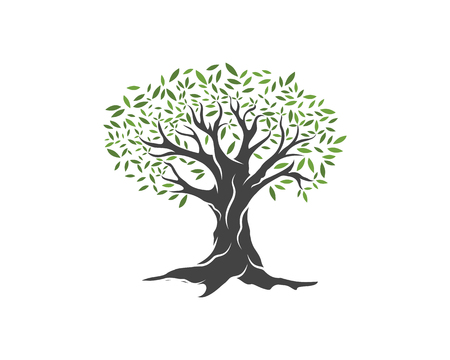 Olive tree vector illustration design template Vectores