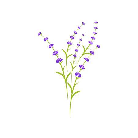 Lavender flower Vector icon illustration design Template Vector Illustratie