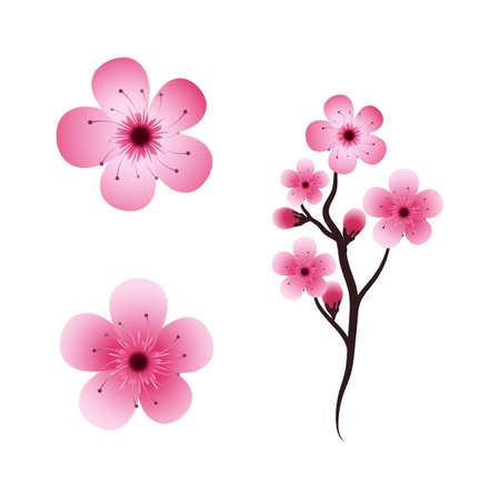 Sakura Beauty flower Vector icon illustration design Vektorgrafik