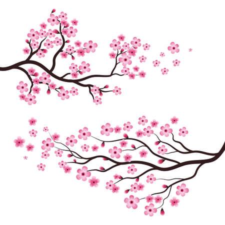 Sakura Beauty flower Vector icon illustration design Banco de Imagens