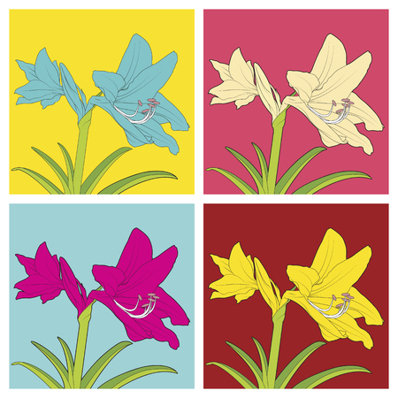 floriculture: Colorful flowers of Hippeastrum.