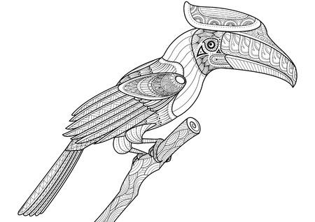 hornbill: hornbill bird.sketch coloring page
