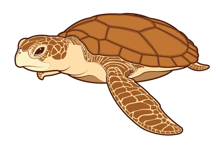 Sea turtle animal cartoon illustration.