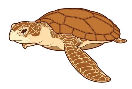 Sea turtle animal cartoon illustration.
